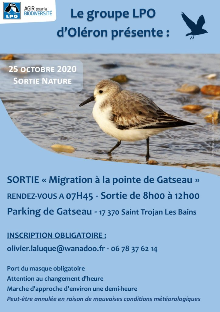 "MAINTENU - Groupe Oléron ""migration à la pointe de Gatseau"" @ Point de Gatseau"